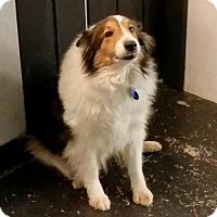 Adopt A Pet :: Jazmine - COLUMBUS, OH