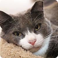 Adopt A Pet :: Roscoe - Sarasota, FL