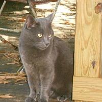 Adopt A Pet :: Gigi - Bonita Springs, FL