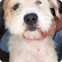 Adopt A Pet :: Gary - Canoga Park, CA