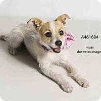 Adopt A Pet :: Amy - Seattle, WA
