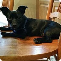 Adopt A Pet :: Poco - Alexandria, VA