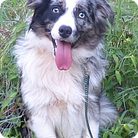 Adopt A Pet :: Teddy - Bedminster, NJ