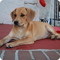 Adopt A Pet :: Lulu - Keyport, NJ