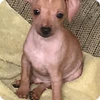 Adopt A Pet :: Teddy - Tucson, AZ