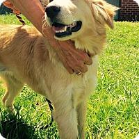 Adopt A Pet :: Hunny - New Canaan, CT
