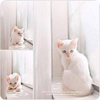 Adopt A Pet :: Squeaker Box - DFW Metroplex, TX