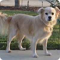 Adopt A Pet :: Rowdy - Palo Alto, CA