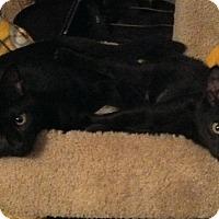 Adopt A Pet :: Stilton - Philadelphia, PA