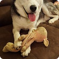 Adopt A Pet :: Sputnik - Horsham, PA