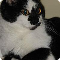 Adopt A Pet :: Fiona - McEwen, TN