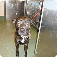 Adopt A Pet :: Marlee - Raleigh, NC