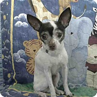 Adopt A Pet :: A5017225 is at Lancaster - Beverly Hills, CA