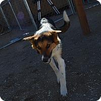 Adopt A Pet :: Sadie - Peyton, CO