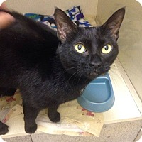 Adopt A Pet :: Layla - THORNHILL, ON