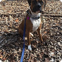 Adopt A Pet :: Romeo - Downingtown, PA