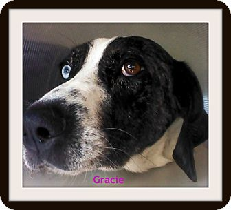 Pointer Mix Dog for adoption in Georgetown, Kentucky - Gracie