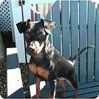 Adopt A Pet :: RICKY - Dennis, MA
