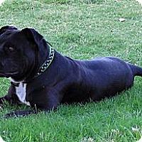 Adopt A Pet :: KING - Phoenix, AZ