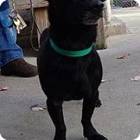 Adopt A Pet :: Amigo (URGENT) - Brattleboro, VT