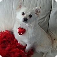 Adopt A Pet :: Nina - Saskatoon, SK