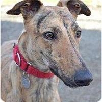 Adopt A Pet :: Payton (Palm City Payton) - Chagrin Falls, OH
