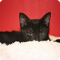 Adopt A Pet :: GEORGE - SILVER SPRING, MD