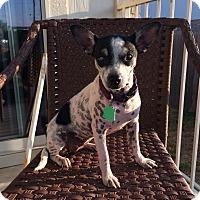 Adopt A Pet :: Chrissie Hynde - Austin, TX