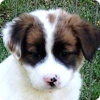 Adopt A Pet :: MIKA - Pine Grove, PA