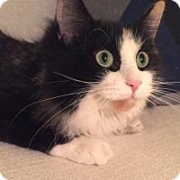 Adopt A Pet :: China - Addison, IL