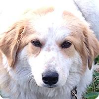 Adopt A Pet :: Wendy - Allentown, PA