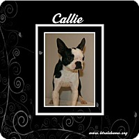 Adopt A Pet :: Callie - Alabaster, AL