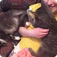 Adopt A Pet :: Matti - Schaumburg, IL