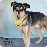 Adopt A Pet :: BILLY - Conroe, TX