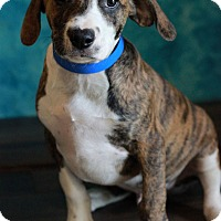 Adopt A Pet :: Fred - Waldorf, MD
