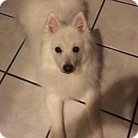 Adopt A Pet :: Sitka of Castle Rock Co - Colorado Springs, CO