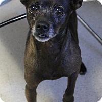 Adopt A Pet :: Marlin - Woodland, CA