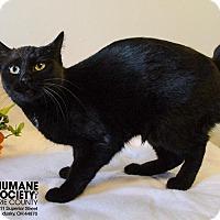 Adopt A Pet :: CLARICE - Sandusky, OH