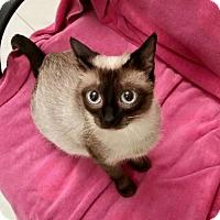 Adopt A Pet :: Neva - Royal Palm Beach, FL