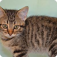 Adopt A Pet :: Poppy - Larned, KS
