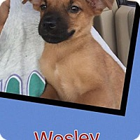 Adopt A Pet :: Wesley - Scottsdale, AZ