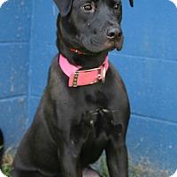 Adopt A Pet :: Harriett - Waldorf, MD