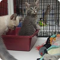 Adopt A Pet :: Helo - yuba city, CA