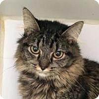 Adopt A Pet :: Star - Prescott, AZ