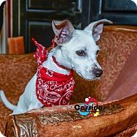 Adopt A Pet :: Donald - Matthews, NC