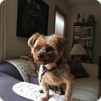 Adopt A Pet :: CHANCE - Traverse City, MI