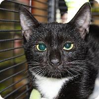 Adopt A Pet :: Shayla - Sarasota, FL