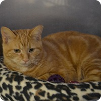 Adopt A Pet :: Blaise - Byron Center, MI