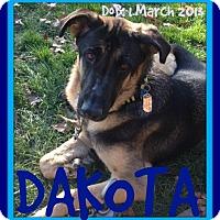 Adopt A Pet :: DAKOTA - White River Junction, VT