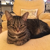 Adopt A Pet :: CP - NC - Teeny - Blairstown, NJ